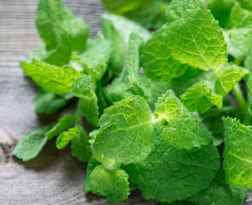 How Mint Impacts Your Oral Health & Overall Health